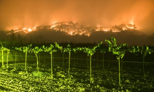 Climate Change and Winemaking - Gratefullane Vineyards - Fires in California - Climate Change Wine